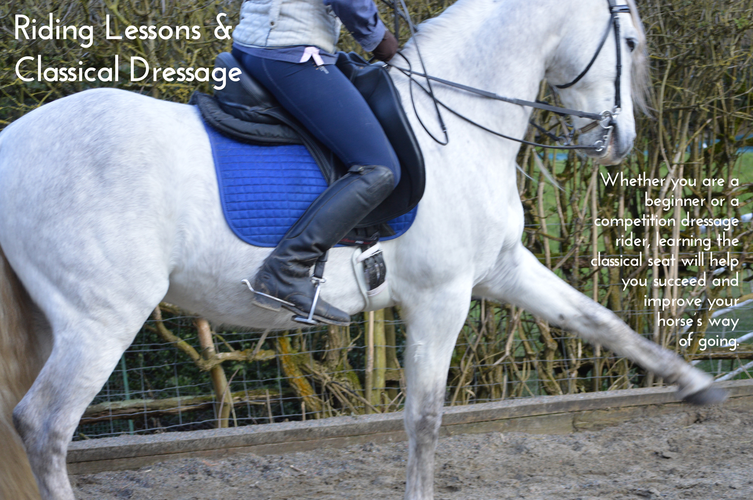 Riding Lessons & Classical Dressage